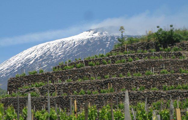 Tornare a viaggiare, almeno con il pensiero, nei territori del vino del Belpaese
